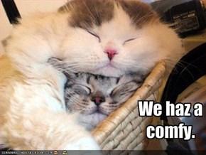 We haz a comfy.