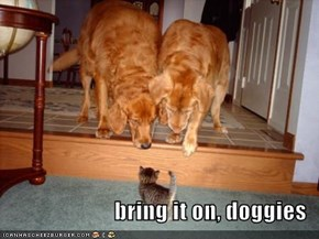 bring it on, doggies