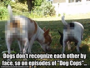 Dogs don't recognize each other by 