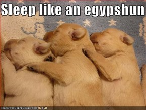 Sleep like an egypshun