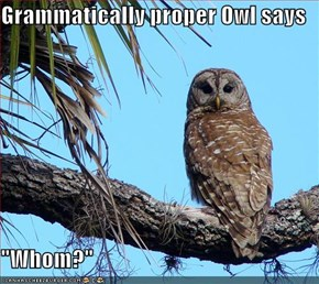 "Grammatically proper Owl says  ""Whom?"""