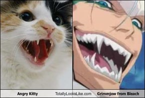 Angry Kitty Totally Looks Like Grimmjow from Bleach