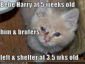 Bebe Harry at 5 weeks old him & brufers left & shelter at 3.5 wks old