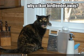 why u tkae birdfeeder away?