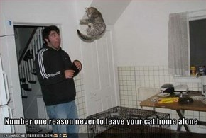 Number one reason never to leave your cat home alone