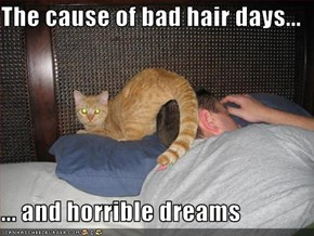 The cause of bad hair days...  ... and horrible dreams