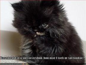 Basement Cat iz on vacayshun, hou mae I taek ur sol toodae?