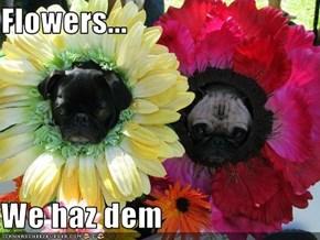 Flowers...  We haz dem
