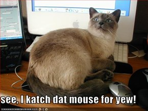see, I katch dat mouse for yew!