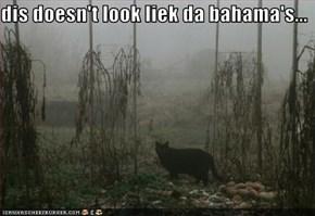 dis doesn't look liek da bahama's...