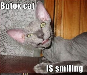 Botox cat  IS smiling
