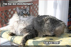 You haz ma cheezburger?