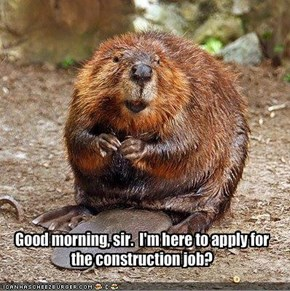 Good morning, sir.  I'm here to apply for the construction job?