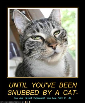 UNTIL  YOU'VE  BEEN  SNUBBED  BY  A  CAT-
