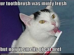 ur toothbrush was minty fresh  but now it smells of cat bref