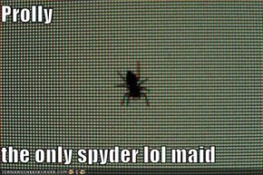 Prolly  the only spyder lol maid