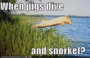When pigs dive   and snorkel?