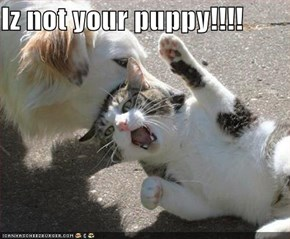Iz not your puppy!!!!