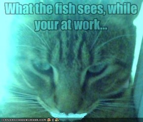 What the fish sees, while your at work...