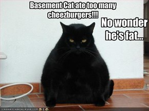 Basement Cat ate too many cheezburgers!!!