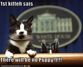 1st kitteh sais  There will be no Puppy!1!!!