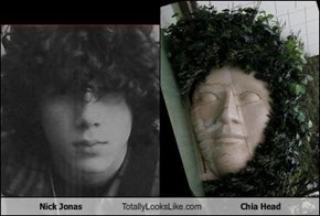 Nick Jonas Totally Looks Like Chia Head
