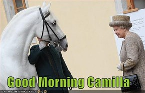 Good Morning Camilla