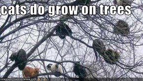 cats do grow on trees