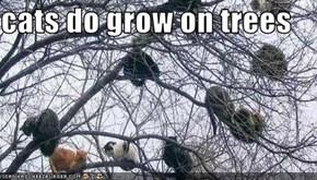 cats do grow on trees