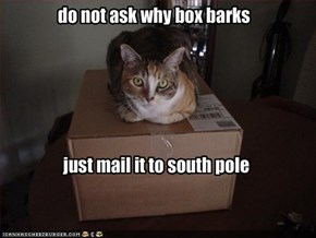 do not ask why box barks
