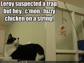 Leroy suspected a trap, 