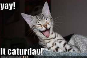 yay!  it caturday!
