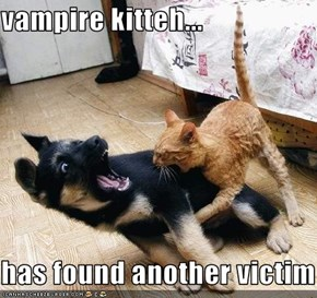 vampire kitteh...  has found another victim