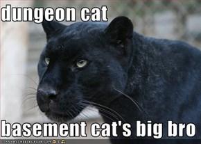 dungeon cat  basement cat's big bro