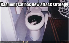 Basment cat has new attack strategy