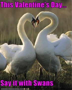 This Valentine's Day...  Say it with Swans