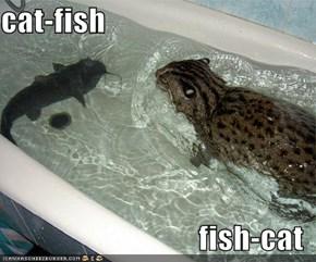 cat-fish  fish-cat
