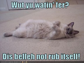 Wut yu watin' fer?    Dis belleh not rub itself!