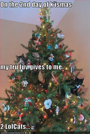 On the 2nd day of k'ismas my tru luv gives to me 2 LolCats...