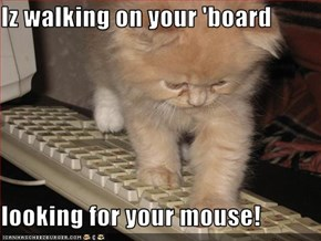 Iz walking on your 'board  looking for your mouse!