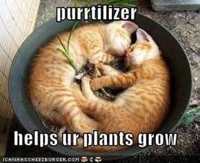 purrtilizer  helps ur plants grow