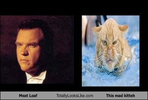 Meat Loaf Totally Looks Like This mad kitteh