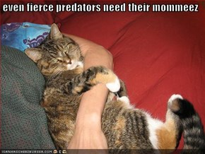even fierce predators need their mommeez