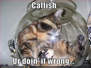 Catfish  Ur doin' it wrong...