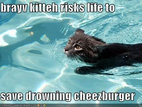 brayv kitteh risks life to   save drowning cheezburger