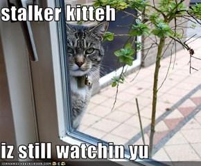 stalker kitteh  iz still watchin yu