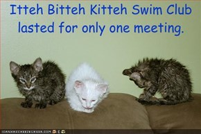 Itteh Bitteh Kitteh Swim Club lasted for only one meeting.