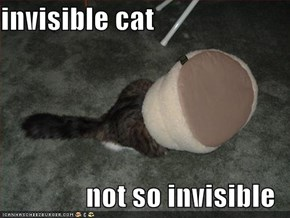 invisible cat  not so invisible