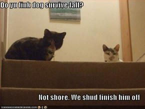 Do yu fink dog survive fall?  Not shore. We shud finish him off
