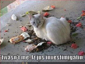 'twasn't me. Iz jus investimigatin.